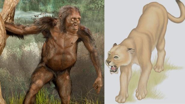 austrolopithecus_dinofelis